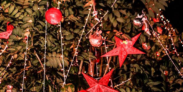 Alila diwa goa ushers in the spirit of christmas with an for Eco christmas lights